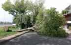 Fırtına Konya'daki Ağaçları Devirdi