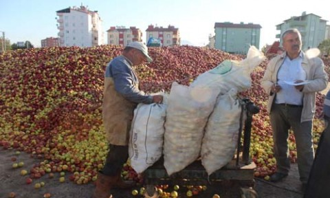 Beyşehir'de Döküntü Elma Alımları Sürüyor