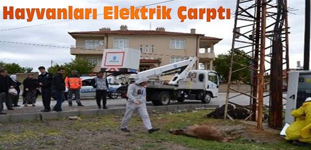 Elektrik çarpan hayvanlar telef oldu