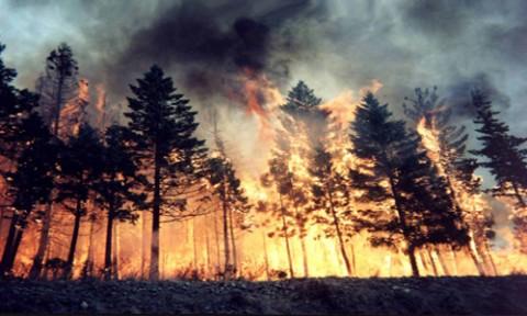 Ermenek'te Orman Yangını