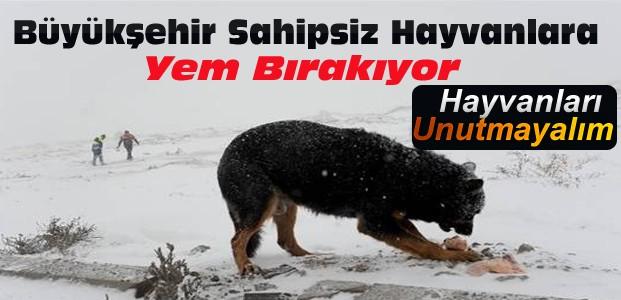 Konya Büyükşehir Sahipsiz Hayvanlara Yem Bırakıyor