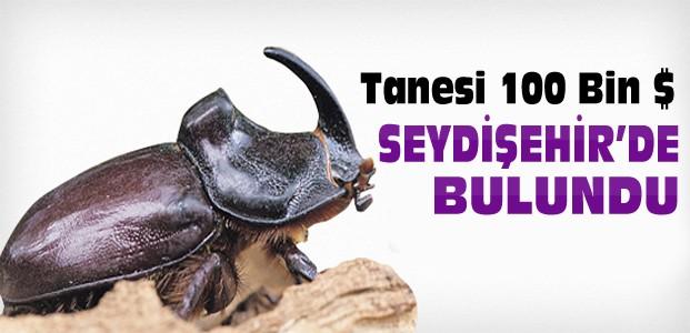 Konya'da 100 Bin Dolarlık Gergedan Böceği Bulundu