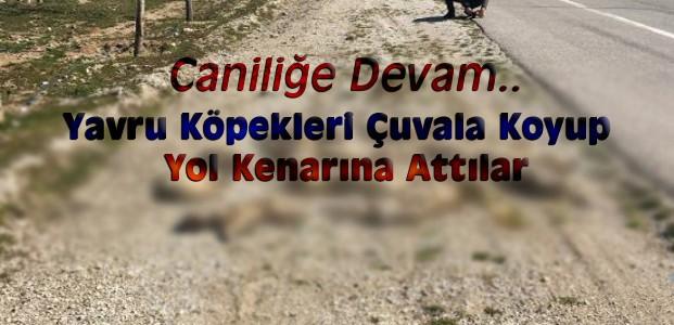 Konya'da 13 Yavru Köpek Yol Kenarında Ölü Bulundu