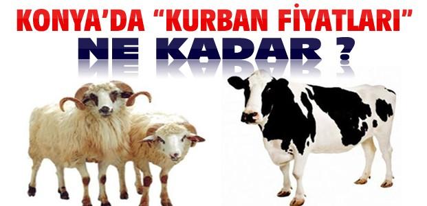 Konya'da Kurbanlık Fiyatları Ne Kadar ?