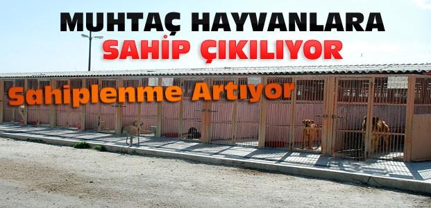 Konya'da Sahipsiz Hayvanlar Unutulmuyor