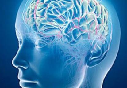 Minyatür İnsan Beyni Üretildi