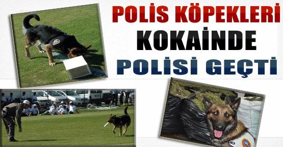 Polis Köpekleri,Kokainde Polisi Geçti