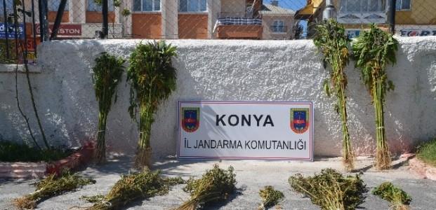 Seydişehir'de Hint Keneviri Operasyonu