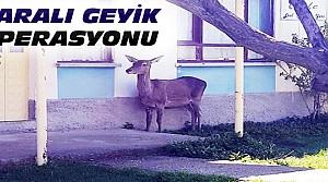 Konya'da Geyik Operasyonu