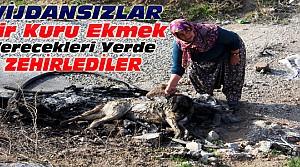 Konya'da Köpek Katliamı