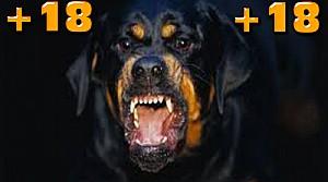 Köpekler Güvenlikçiyi Parçaladı-VİDEO +18