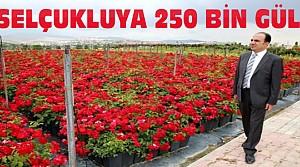 Selçuklu Güllerle Donatılacak