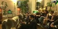 Adnan Oktar Canlı Yayına At Çıkardı-VİDEO