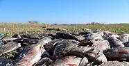 Beyşehir Gölünde Çin Sazanına Karşı Mücadele