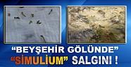 Beyşehir Gölünde Simulium Salgını !