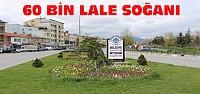 Beyşehir'de 60 Bin Lale Soğanı Dikildi