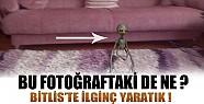 Bitlis'te İlginç Bir Yaratık Cep Telefonuyla Çekildi !