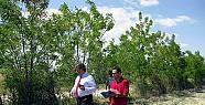 Ereğli'de 300 Bin Ağaç Toprakla Buluştu
