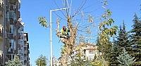 Ereğli'de Ağaç Budama Çalişmaları