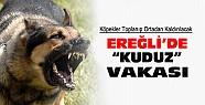 Ereğli'de Kuduz Vakası:Köpekler toplanarak ortadan kaldırılacak