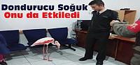 Flamingo Donmak Üzereyken Kurtarıldı