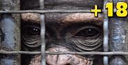 Hayvan sirklerinin gerçek yüzü-VİDEO