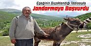 Konya'da eşeğinin bıçaklandığı iddiasıyla jandarmaya başvurdu