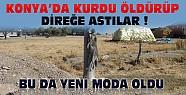 Konya'da Köye İnen Kurdu Öldürüp Sonra da Direğe Astılar