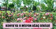 Konya'ya 11 Milyon Ağaç Dikildi