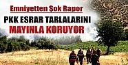 PKK'nın Şoke Eden Esrar Tuzağı!