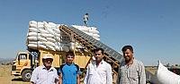 Seydişehir'de TMO  Koza Alımlarına Başladı