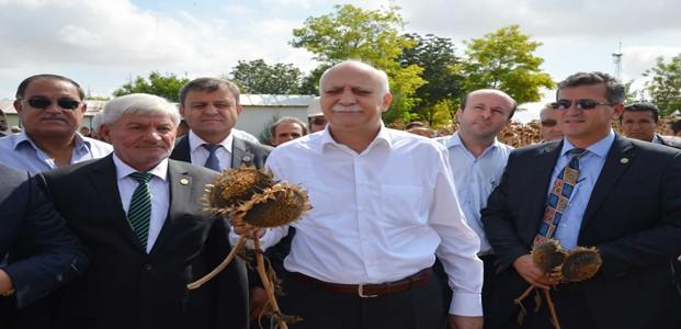 TZOB Başkanı Ayçiçeği Hasadına Katıldı