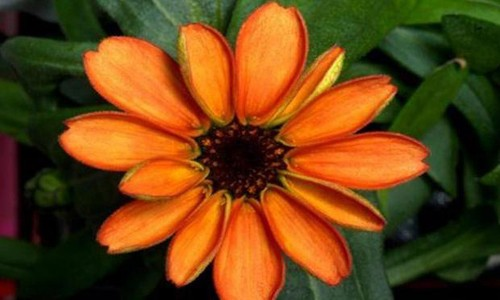 Uzayda ilk çiçek yetiştirildi