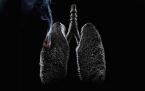 Sigara içilen ve içilmeyen ciğerler