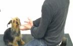 Köpeklerin illüzyonla imtihanı