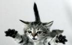 Yavaş Çekimde Kedinin 4 ayak üstüne düşüşü