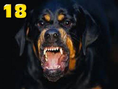Köpekler Güvenlikçiyi Parçaladı +18