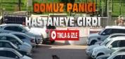 Konya'da Domuz Hastaneye Girdi